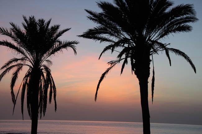 А пальмы шелестят так, будто всё время идёт дождь