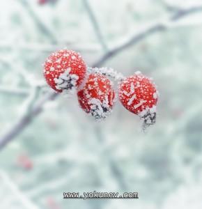 jajca-na-snegu