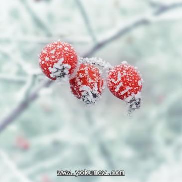 [Рассказ] Яйца на снегу (Неожиданные праздники)