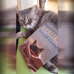 Кошка Далай-Ламы — Дэвид Мичи [Рецензия]