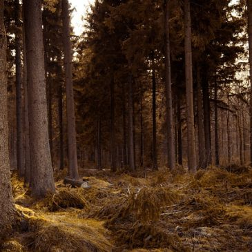 Защитники обычного леса [Рассказ]