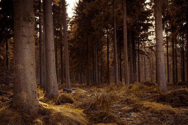 Защитники обычного леса