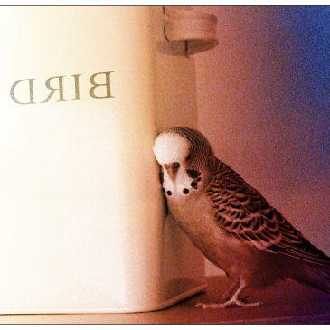 Вольная птица (Рассказ)