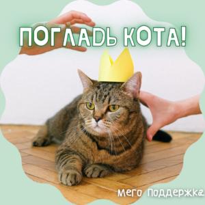 НЕ ЛАПКИ «Погладь кота!» – индивидуальная работа